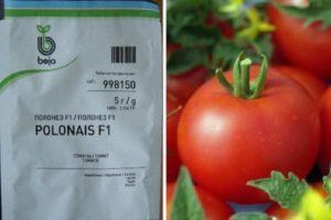 Описание томата гибрида Полонез F1 и рекомендации по выращиванию