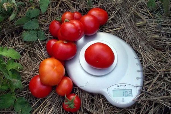 Взвешивание томатов
