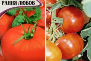 Описание томата Ранняя девочка и правила опыления растения