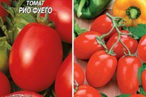 Описание томата Рио Фуего: характеристика и выращивание сорта