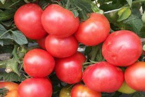 Описание гибридного томата Розовый король и характеристика плодов