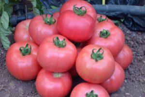 Описание томата Розовый мясистый, рекомендации по выращиванию