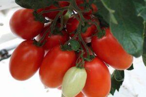 Описание томата Сэр Элиан и рекомендации по выращиванию гибрида