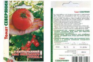 Описание томата Северянин, характеристики и отзывы