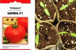 Характеристика томата Шива F1, технология культивирования и отзывы овощеводов