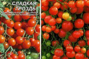 Описание томата Сладкая гроздь, отзывы и урожайность сорта