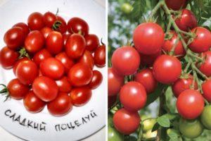 Описание томата Сладкий поцелуй, посадка и выращивание сорта