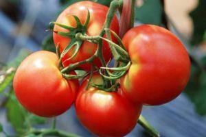 Описание и характеристика сорта томата Слот , правила выращивания