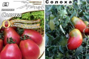 Описание томата Солоха: рекомендации по выращиванию
