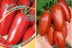 Описание томата Супербанан, агротехника выращивания и урожайность