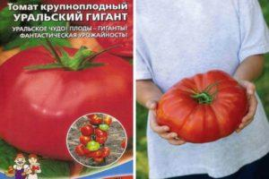 Описание и характеристика томата Уральский гигант, культивирование и выращивание сорта