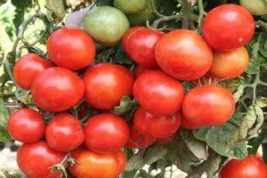 Описание томата Уральский ранний и рекомендации по выращиванию