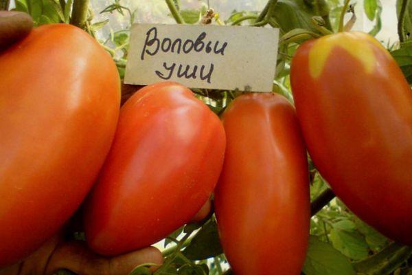 Длинноплодные помидоры