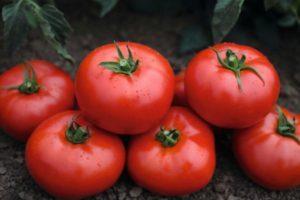 Описание томата Волверин: характеристика плодов, борьба с вредителями