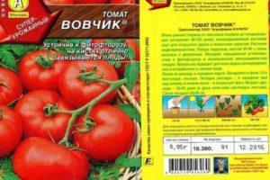 Описание томата Вовчик и его характеристика, особенности выращивания