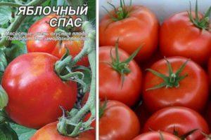 Описание и характеристики томата Яблочный Спас, выращивание