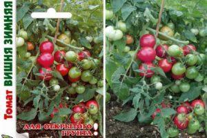 Описание сорта Зимняя вишня, выращивание и правила посадки