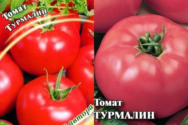семена томата турмалин