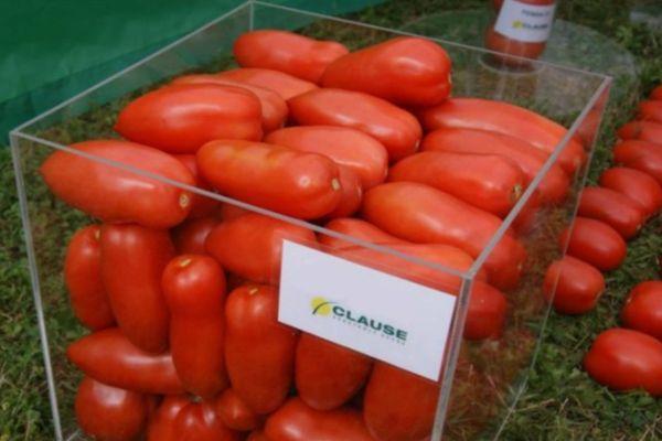 Ящик с помидорами