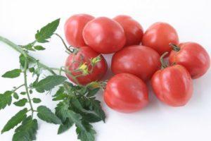 Описание томата Амулет, характеристика плодов и борьба с вредителями