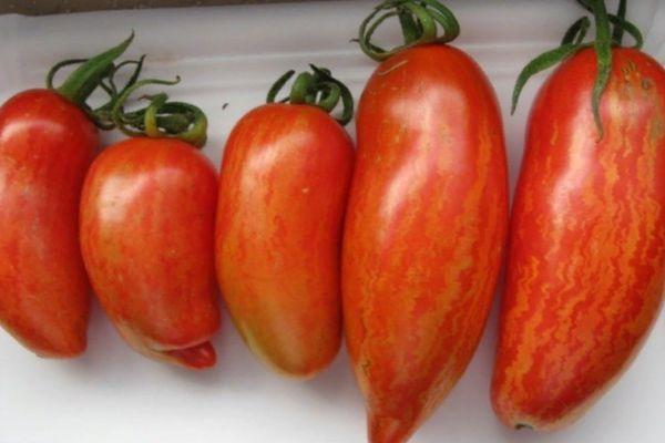 кистевой томат