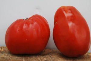 Описание томата Бочата и правила выращивания полудетерминантного сорта