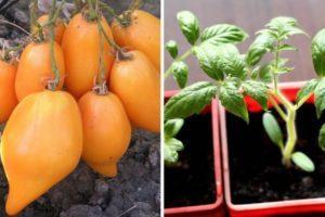 Описание томата Буратино, технология выращивания и рекомендации