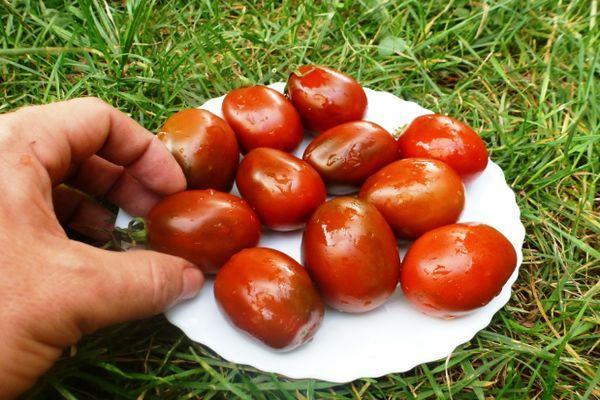 Темные томаты