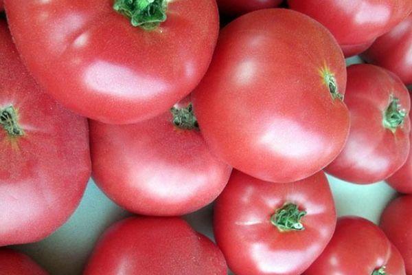 Розовые томаты