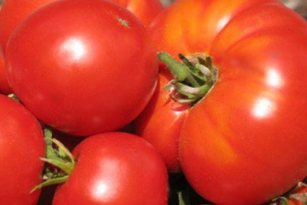 Спелые помидоры