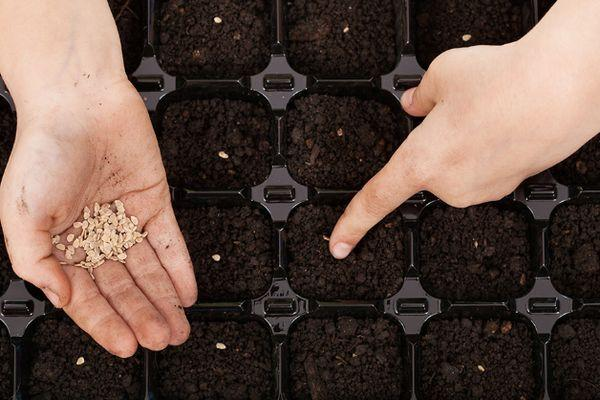 Рассада из семян