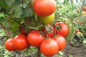 Описание томата Эффект, особенности выращивания и отзывы