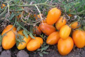 Описание крупноплодного томата сорта Эльдорадо и особенности выращивания