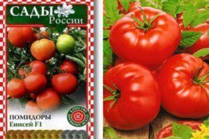 Характеристика и описание томата Енисей f1, агротехника выращивания сорта