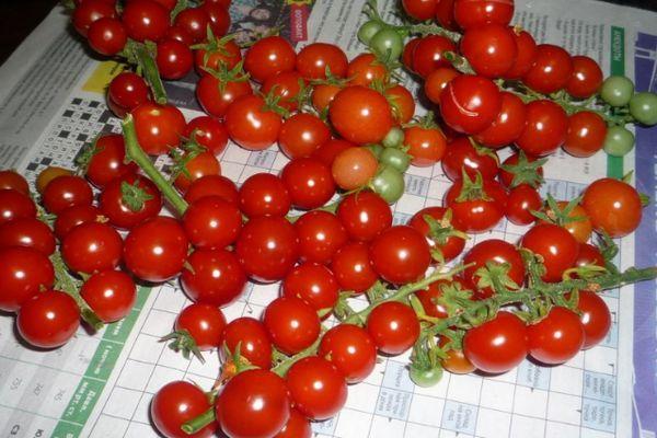 Декоративный томат