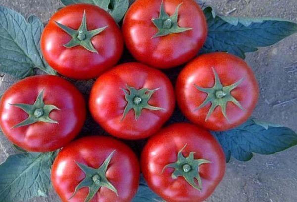 Круглоплодные томаты