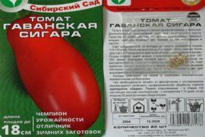 Описание раннеспелого томата Гаванская сигара и особенности выращивания рассадным способом