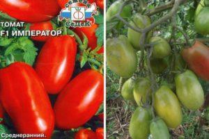 Описание томата Император, характеристика и выращивание гибрида
