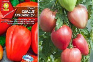 Описание томата Сердце красавицы и выращивание сорта