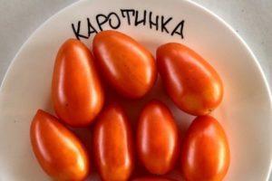Характеристика лечебного томата Каротинка и правила выращивания на участке
