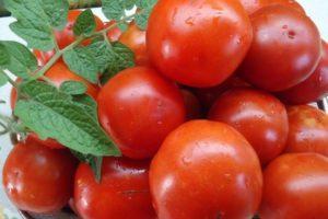 Описание томата Колобок, правила выращивания и отзывы садоводов