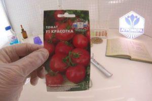 Характеристика томата Красотка и выращивание гибридного сорта