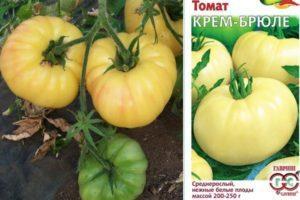 Характеристика томата Крем-брюле и агротехника выращивания