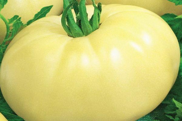 Белый помидор