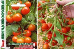 Характеристика томата Ленинградский скороспелый и техника выращивания