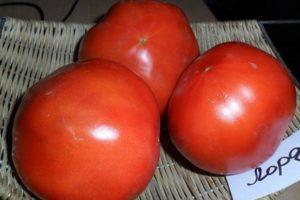 Описание томата Лорд и особенности выращивания растения