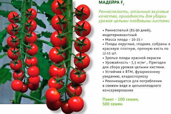 Описание помидора