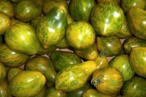 Описание среднеспелого сорта томата Майкл Поллан, выращивание и уход