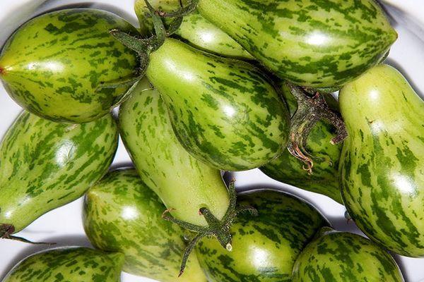 Зеленоватые томаты