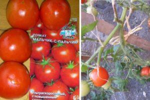 Особенности и достоинства томата Мальчик с пальчик, выращивание и уход